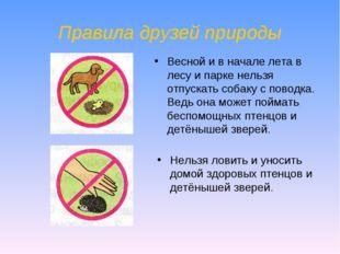 Правила друзей природы Нельзя ловить и уносить домой здоровых птенцов и детён