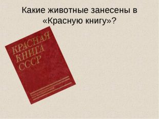 Какие животные занесены в «Красную книгу»?