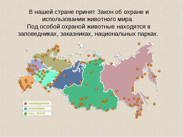 В нашей стране принят Закон об охране и использовании животного мира. Под осо...