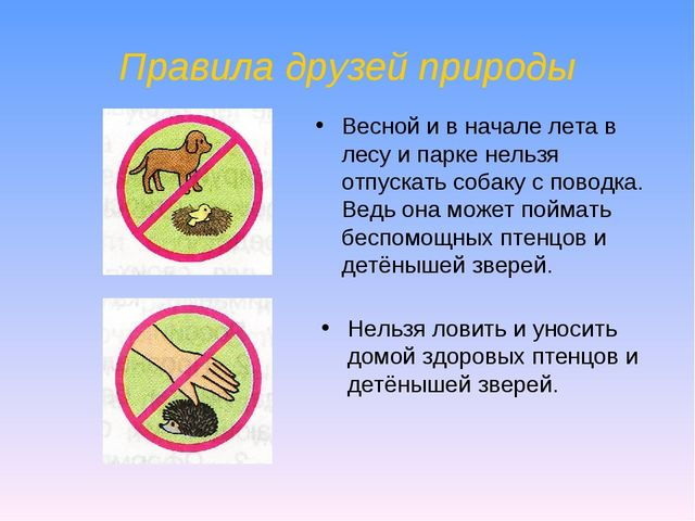 Правила друзей природы Нельзя ловить и уносить домой здоровых птенцов и детён...