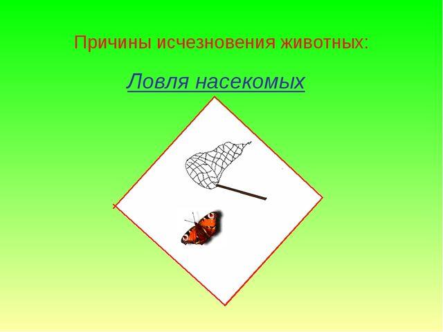 Ловля насекомых Причины исчезновения животных: