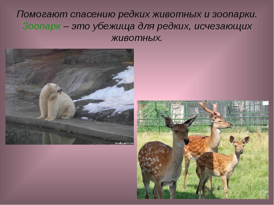 Помогают спасению редких животных и зоопарки. Зоопарк – это убежища для редки...