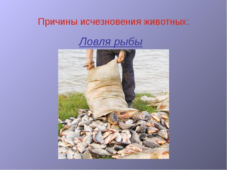 Ловля рыбы Причины исчезновения животных: