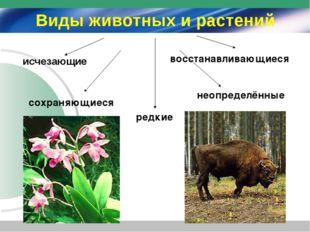 Виды животных и растений исчезающие сохраняющиеся редкие восстанавливающиеся