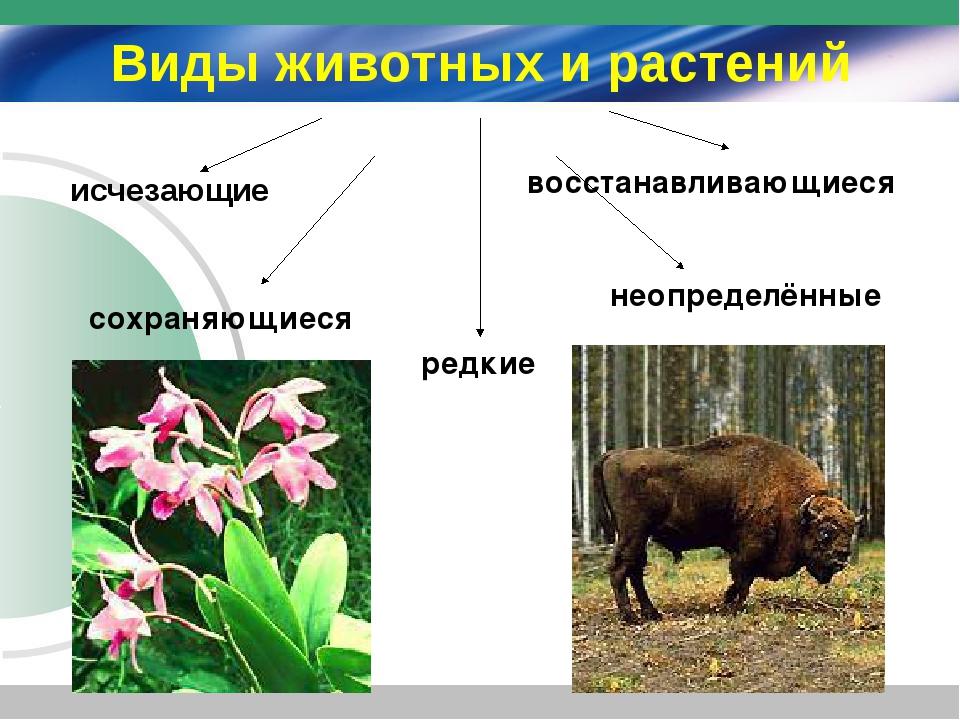Виды животных и растений исчезающие сохраняющиеся редкие восстанавливающиеся...