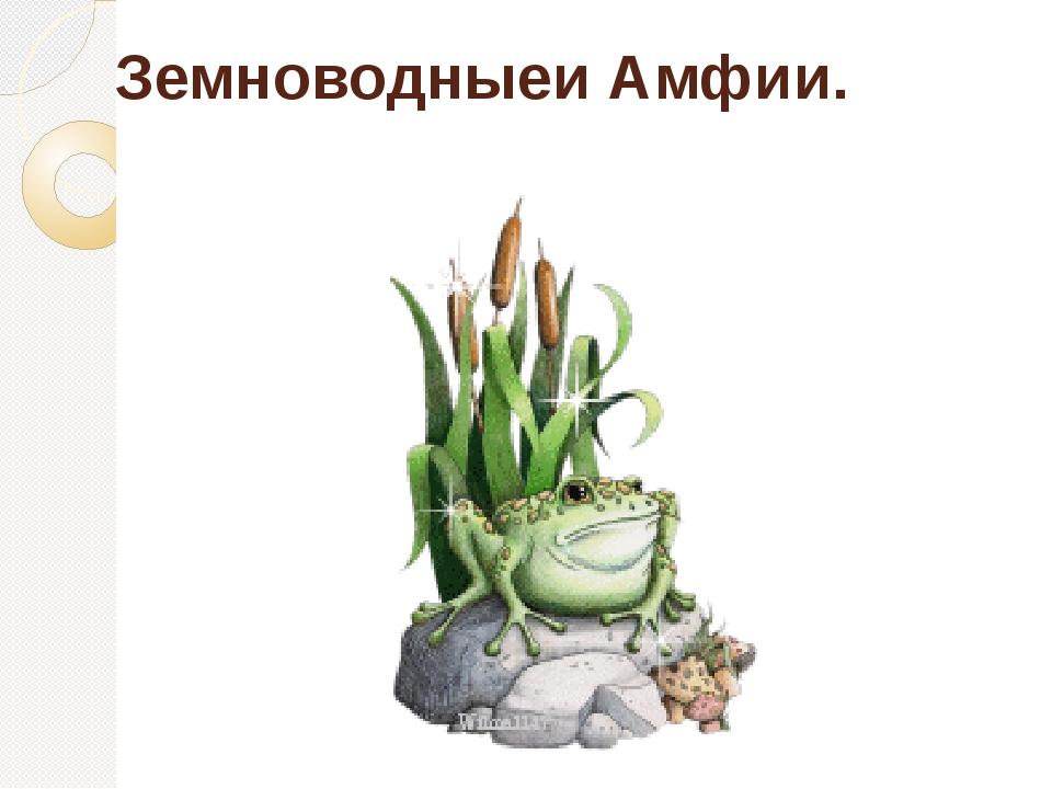 Земноводныеи Амфии.