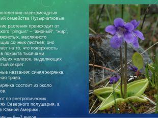 Род многолетних насекомоядных растений семействаПузырчатковые. Название раст