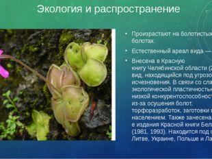Экология и распространение Произрастают на болотистых лугах, болотах. Естеств