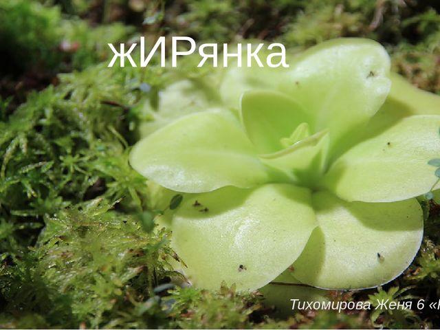 Тихомирова Женя 6 «Р» жИРянка