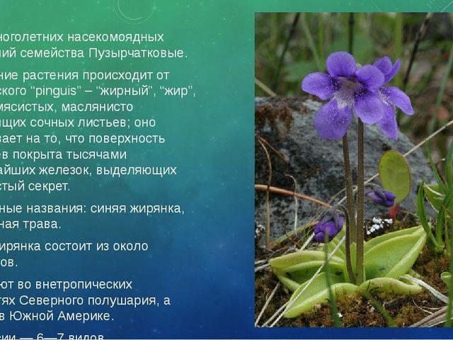 Род многолетних насекомоядных растений семействаПузырчатковые. Название раст...