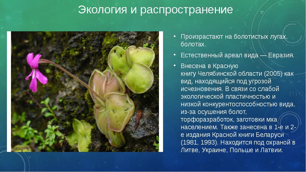 Экология и распространение Произрастают на болотистых лугах, болотах. Естеств...