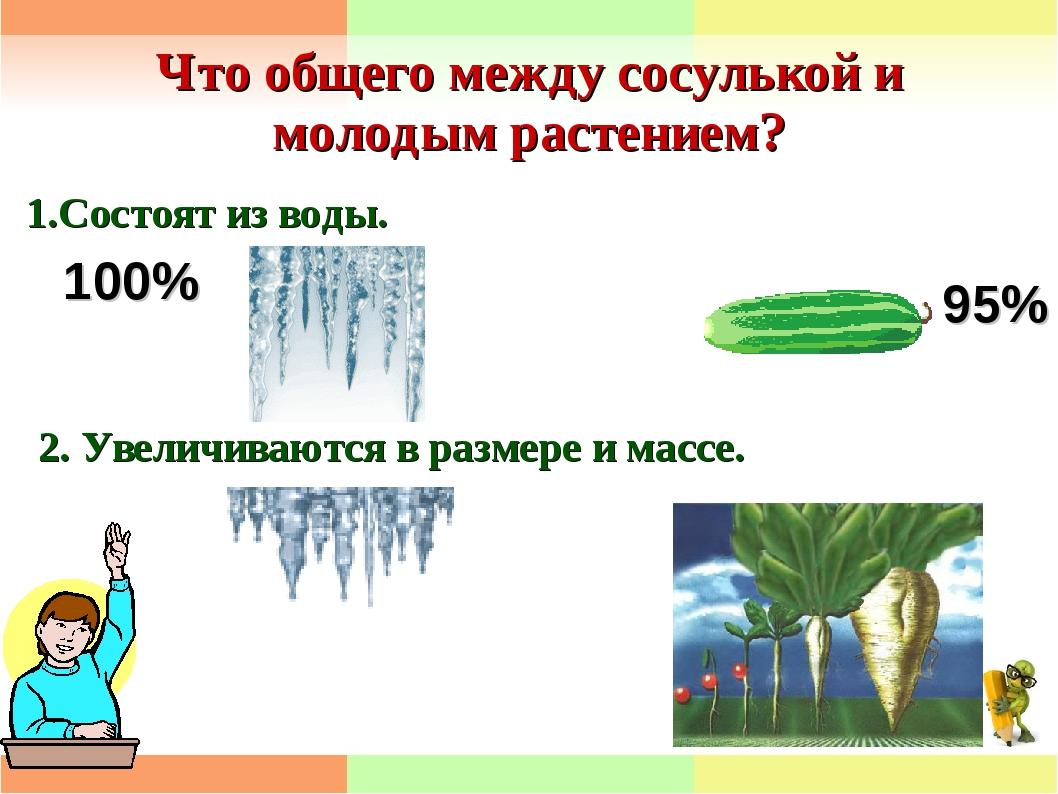 Что общего между сосулькой и молодым растением? 1.Состоят из воды. 95% 100% 2...