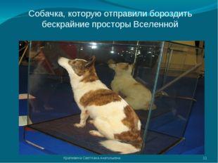 Собачка, которую отправили бороздить бескрайние просторы Вселенной * Крапивин