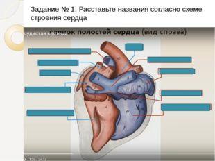 Задание № 1: Расставьте названия согласно схеме строения сердца