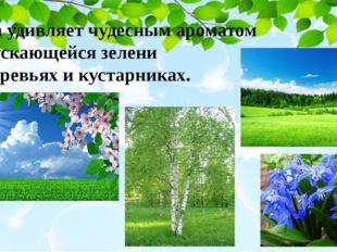 Весна удивляет чудесным ароматом распускающейся зелени на деревьях и кустарни