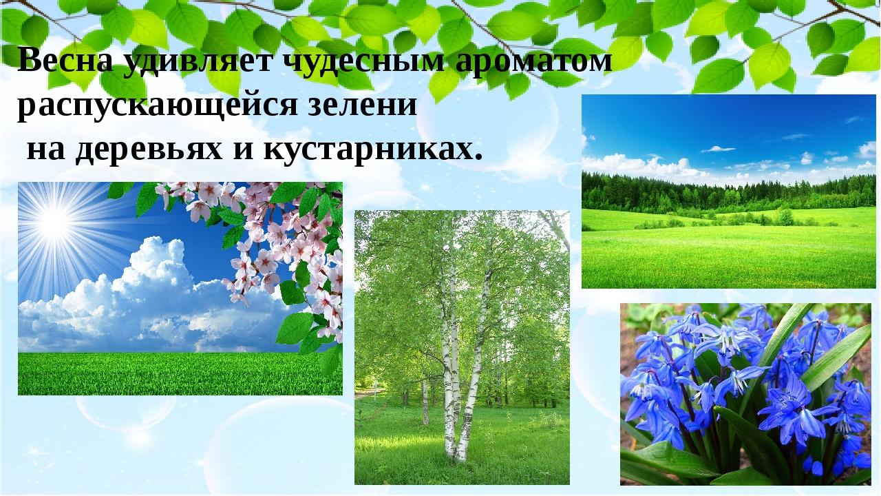 Весна удивляет чудесным ароматом распускающейся зелени на деревьях и кустарни...
