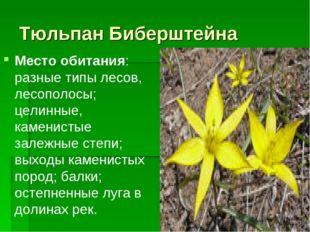 Тюльпан Биберштейна Место обитания: разные типы лесов, лесополосы; целинные,