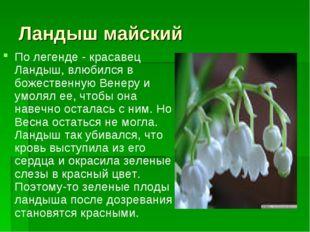 Ландыш майский По легенде - красавец Ландыш, влюбился в божественную Венеру и