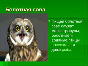Болотная сова Пищей болотной сове служат мелке грызуны, болотные и водяные пт