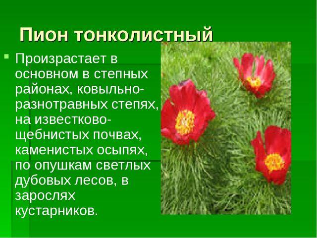 Пион тонколистный Произрастает в основном в степных районах, ковыльно-разнотр...