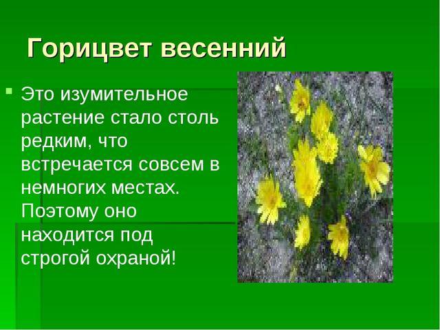 Горицвет весенний Это изумительное растение стало столь редким, что встречает...