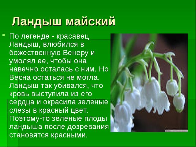 Ландыш майский По легенде - красавец Ландыш, влюбился в божественную Венеру и...