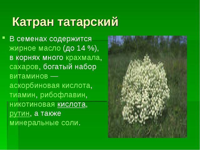 Катран татарский В семенах содержится жирное масло (до 14%), в корнях много...