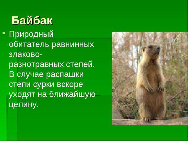 Байбак Природный обитатель равнинных злаково-разнотравных степей. В случае ра...
