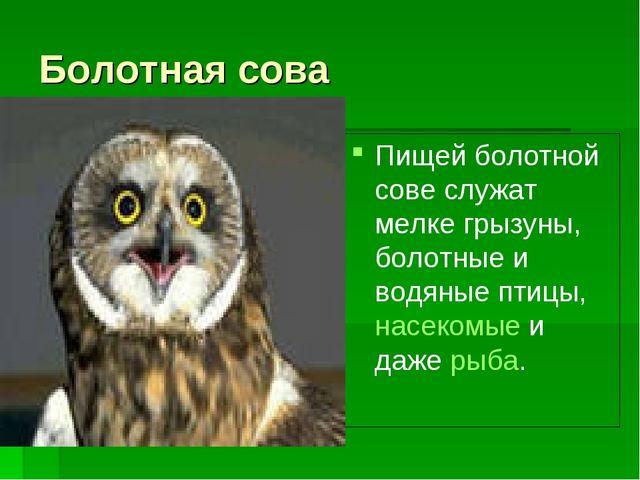Болотная сова Пищей болотной сове служат мелке грызуны, болотные и водяные пт...