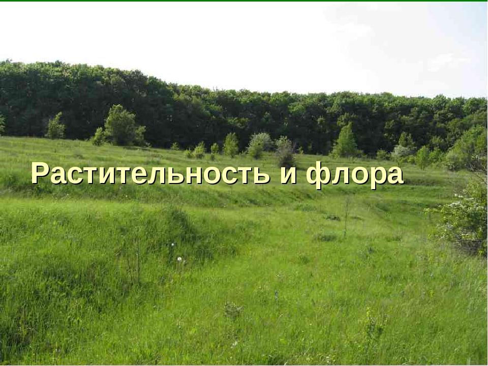 Растительность и флора
