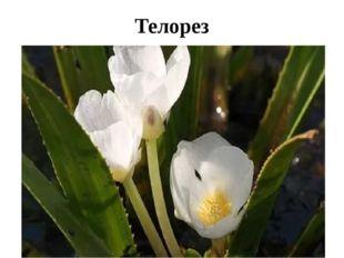 Телорез