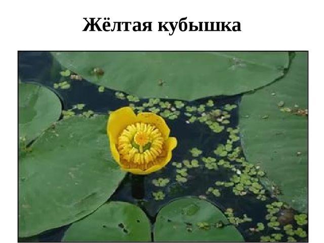 Жёлтая кубышка