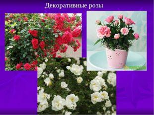 Декоративные розы