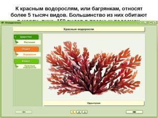 К красным водорослям, или багрянкам, относят более 5тысяч видов. Большинство