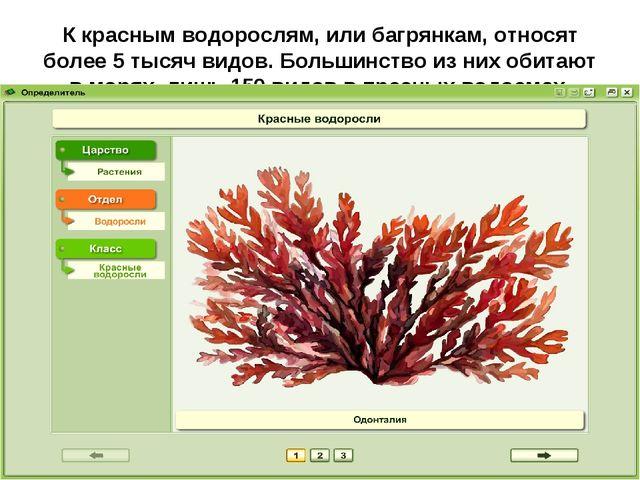 К красным водорослям, или багрянкам, относят более 5тысяч видов. Большинство...