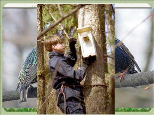 Введение Весна — пора, когда оживает природа, расцветают деревья, птицы приле