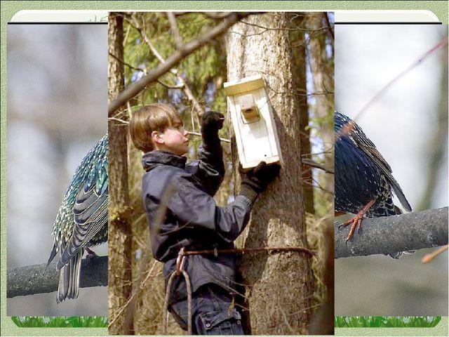 Введение Весна — пора, когда оживает природа, расцветают деревья, птицы приле...