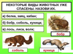 НЕКОТОРЫЕ ВИДЫ ЖИВОТНЫХ УЖЕ СПАСЕНЫ. НАЗОВИ ИХ. а) белка, заяц, кабан; б) боб