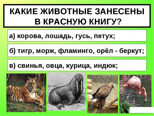 КАКИЕ ЖИВОТНЫЕ ЗАНЕСЕНЫ В КРАСНУЮ КНИГУ? а) корова, лошадь, гусь, петух; б) т...