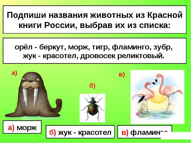 Подпиши названия животных из Красной книги России, выбрав их из списка: орёл...