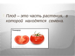 Плод – это часть растения, в которой находятся семена.
