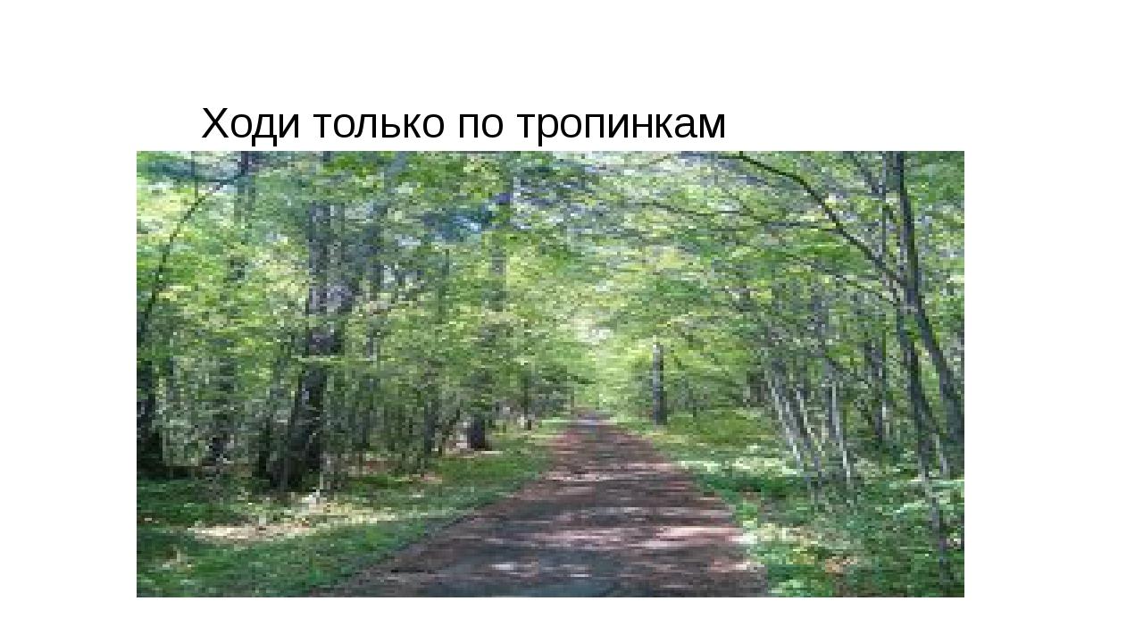 Ходи только по тропинкам