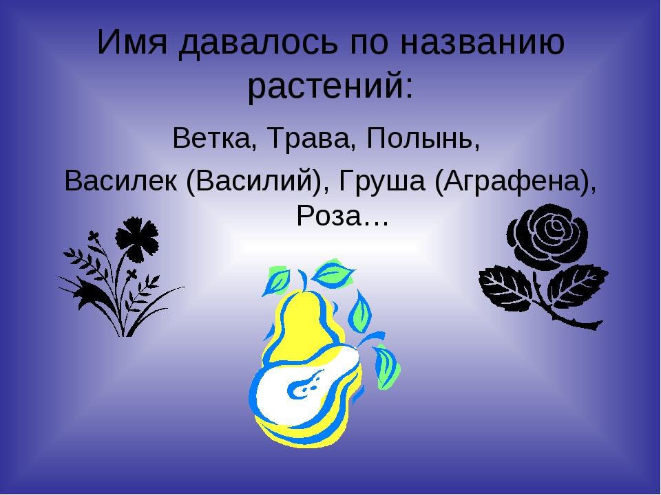 Имя давалось по названию растений: Ветка, Трава, Полынь, Василек (Василий), Г...