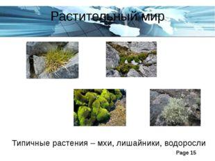 Растительный мир Типичные растения – мхи, лишайники, водоросли Page