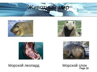 Животный мир Морской леопард Морской слон Page