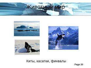 Животный мир Киты, касатки, финвалы Page