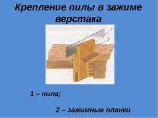Крепление пилы в зажиме верстака 1 – пила; 2 – зажимные планки