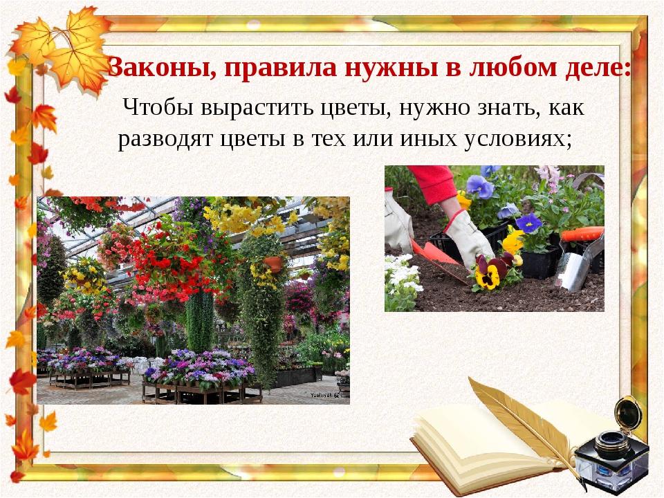 Законы, правила нужны в любом деле: Чтобы вырастить цветы, нужно знать, как р...