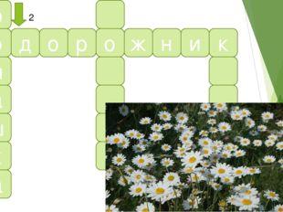 р о м а ш к а п д о р о ж н и к 2 2. Бело-желтые цветки, Для гаданий лепестки