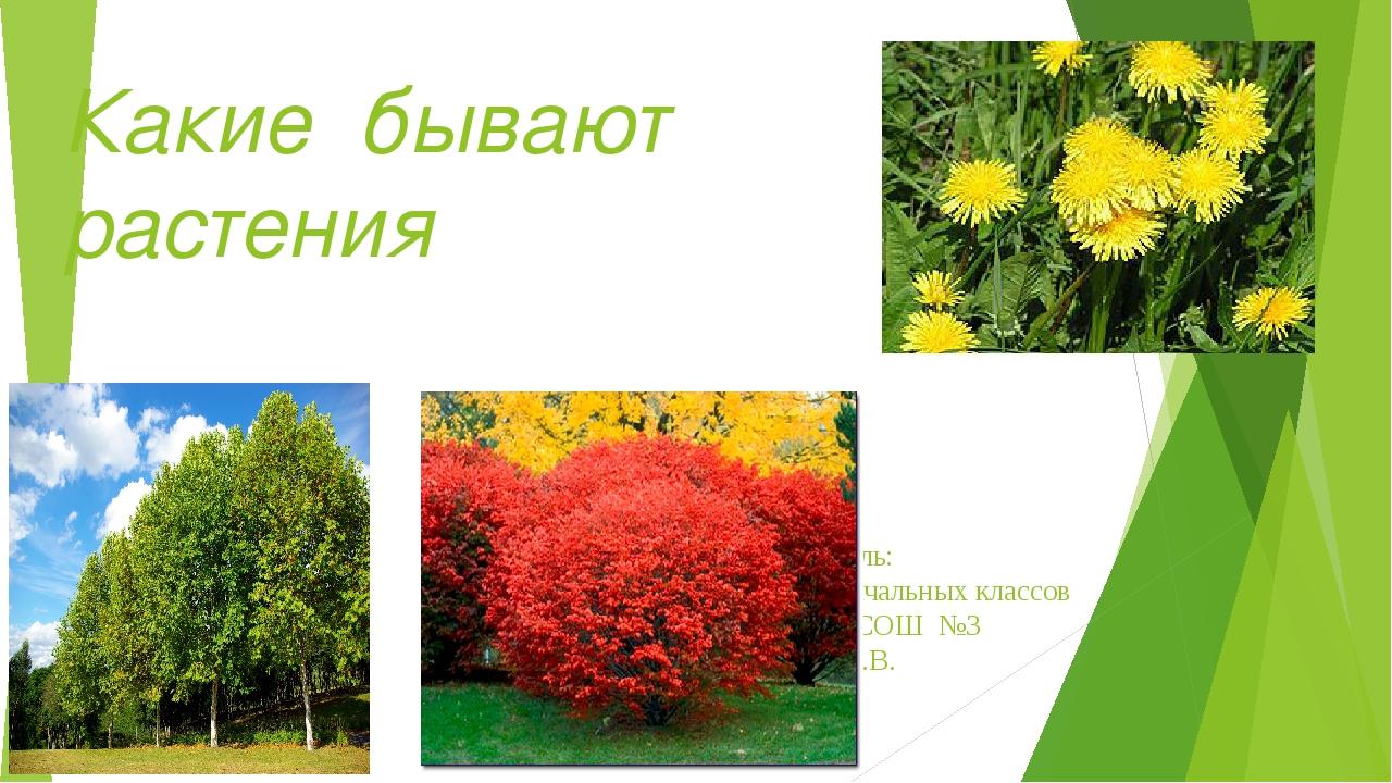 Какие бывают растения Составитель: учитель начальных классов МОБУ МСОШ №3 Еда...